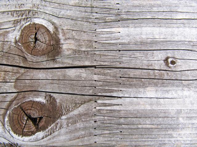 Littlelulu_carnia_incrocio_legno